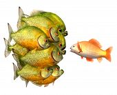 stock photo of piranha  - Persuasion concept - JPG