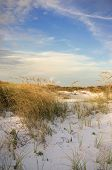Pensacola Beach Dunes At Sunset