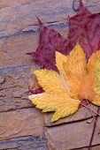 colorfull autumn leaves in a stone wall