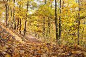 autumnal view of deciduous forest and forest way