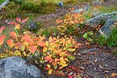Autumn Scenery Of Montana