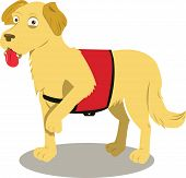 picture of seeing eye dog  - A vector cartoon representing a service dog in action - JPG