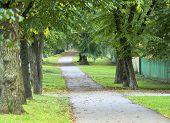 Autumn Tree Alley 1