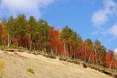 stock photo of sakhalin  - Autumn landscape - a bright wood in mountain on breakaway. Island Sakhalin.   ** Note: Slight blurriness, best at smaller sizes - JPG