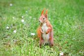 Squirrel Standing On The Grass With Flowers
