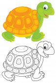 picture of turtle shell  - Funny green and yellow tortoise walking - JPG