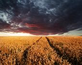 Stunning Wheatfield Landscape Summer Sunset Under Moody Stormy Dky