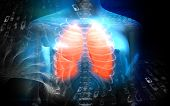 Human Female Body With Lungs