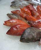 image of red snapper  - Red snapper on ice in the fish market - JPG