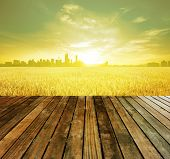 Wooden platform before Kuala Lumpur capital city of Malaysia, landscape view over paddy field planta