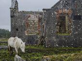 horse grazing near ruins