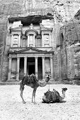 stock photo of treasury  - Black and White image of Arabian camels in front of the Treasury Building at Petra - JPG