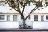 Bike and Urban Tree