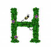 Alphabet Bee Buzz H