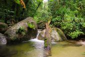 Fallen Log In Rainforest Stream