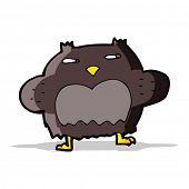 cartoon suspicious owl