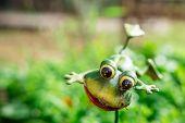 Cutie Frog