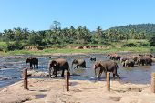 Elephants go on the watering place