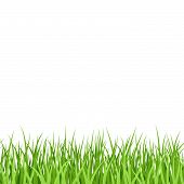 Green Grass. Seamless. Vector.