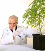 Doctor Sativa, a board certified Medical Marijuana Doctor explains the Medical Benefits of Medical C