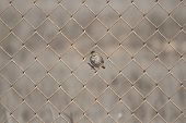 Song Bird on Fence