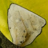 Spots Of Decay And Fungy On Green Leaf