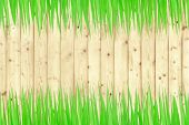 Green Grass And Wooden Wall