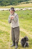 Old Sheperd Near His Flock