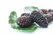 pic of mulberry  - ripe black mulberry with leaves on a white background - JPG