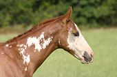 Paint Colt-Sideview