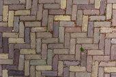 Herringbone Brick Pathway
