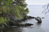Green stone looks out of Aegean Sea. Head of dinosaur.