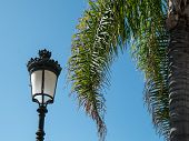 Strret Light And Palm Tree