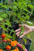 Home Made Organic Veggies