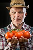 Farmer Holding Fresh Harvested Tomatoes