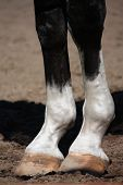 Close Up Of Horse Legs
