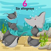 image of stingray  - Illustrator of number six stingrays on background - JPG