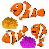 Illustrator of clown fish