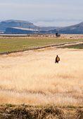 Lone Man Hunter Bird Dog Hunting Fowl Birds Tule Lake