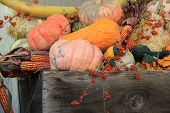 stock photo of bittersweet  - Various squash - JPG