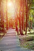 Sunlight shining through the tree canopy in a forest with wooden boardwalk
