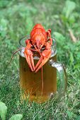 picture of crawfish  - Red crawfish with beer on green grass - JPG