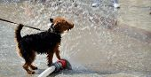 image of firehose  - view of dog jumping in water from firehose - JPG