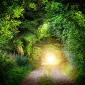 picture of illuminating  - Fantasy landscape with a green tunnel of illuminated trees on a forest path leading to a mysterious light - JPG
