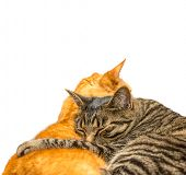 picture of snoopy  - Two cats sleeping together - JPG