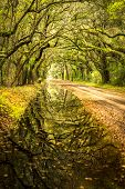 stock photo of backwoods  - Recent flooding rains in the low country covered Botany Bay road leading to this stunning reflection of the trees in the water - JPG