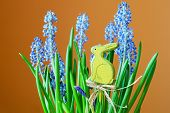 image of hare  - Flower with blue flowers and green leaves and yellow hare - JPG