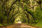 stock photo of backwoods  - A live oak lined dirt road leading to Botany Bay Plantation located on Edisto Island - JPG