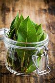foto of bay leaf  - Fresh bay leaves in a glass jar on a rustic wooden background - JPG