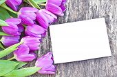 stock photo of six-petaled  - violet tulips on the oak brawn table with white sheet of paper 6 - JPG
